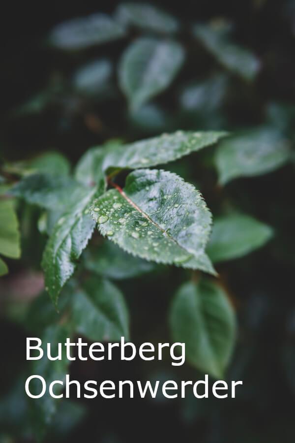 Butterberg Ochsenwerder - die Rolle der Banken